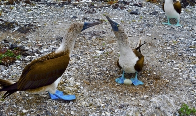 Changes Affecting Travelers to Galapagos Islands